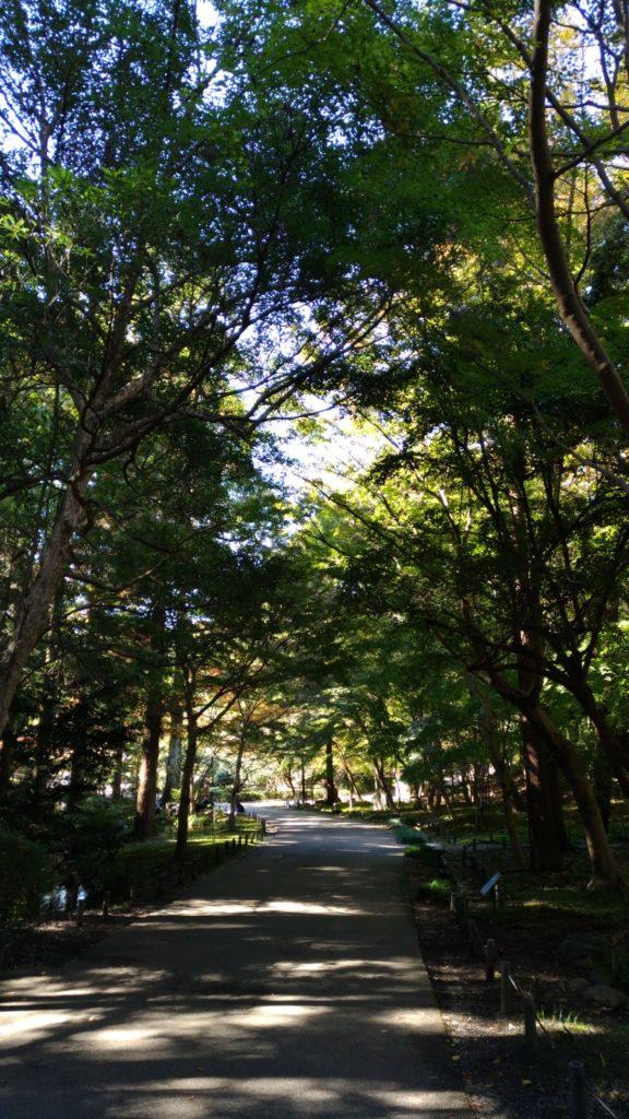 東山動植物園の紅葉見頃情報の参考画像