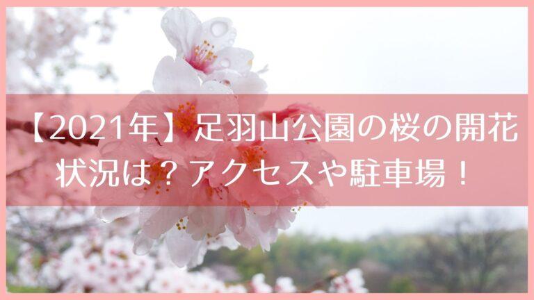 【2021年】足羽山公園の桜の開花状況は?アクセスや駐車場をチェック!イメージ画像
