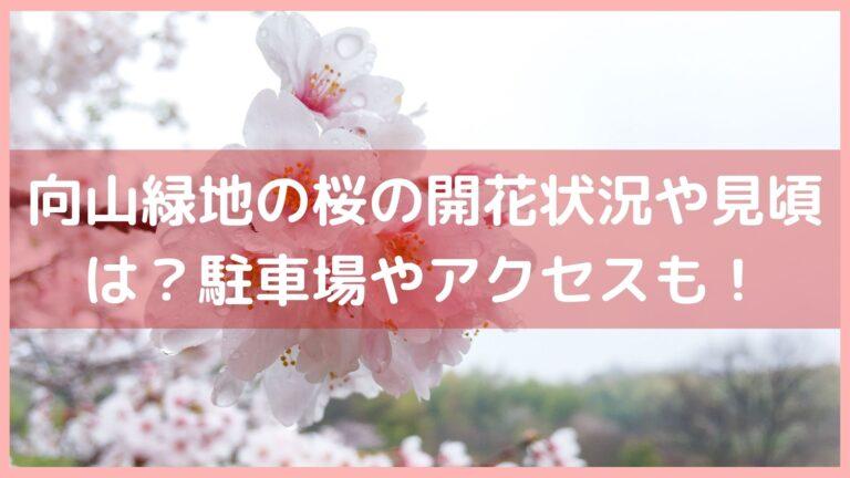 向山緑地の桜の開花状況や見頃は?駐車場やアクセスをチェック!イメージ画像